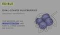 SurvivalGuide-BlueberryInfo.png