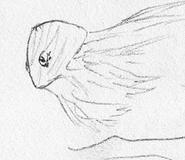 Squiddyfish flying