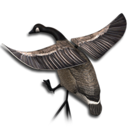 Decoy canada goose flapping wings.png