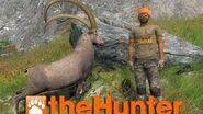 TheHunter - Alpine ibex hunting 2016