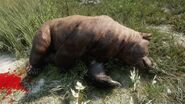 Grizzly bear common