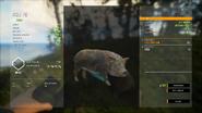 Brown Hybrid Feral Pig (Light Version) (Male)