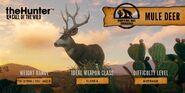 Mule Deer Summary