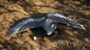 Canada goose gray
