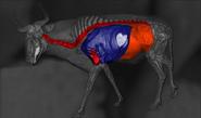 Blue wildebeest shot scheme