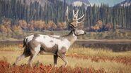 Beautiful Piebald Black-Tailed Deer Picture