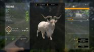 Blonde Feral Goat (Male)