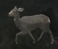 Mule Deer Gray