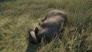 Cape buffalo grey