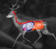 Red deer shot scheme