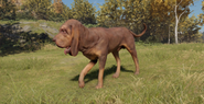 Bloodhound male liver and tan fullcoat