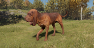 Bloodhound male liver and tan saddle