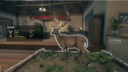 Diamond Light Common Fur Variant Fallow Deer
