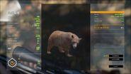 "Brown ""Black Bear"""