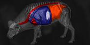 Cape buffalo shot scheme