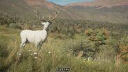 Albino Red Deer (DIZZYNLD)