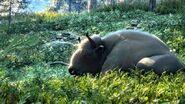 Common European Bison Picture