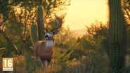 White-Tailed Deer in Rancho del Arroyo