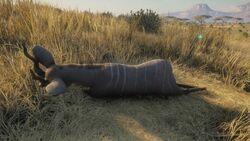 Lesser kudu common.jpg