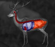 Roosevelt elk shot scheme