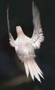 Ring-Necked Pheasant Leucistic