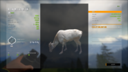 TheHunter Call of the Wild 1 5 2021 7 23 54 AM
