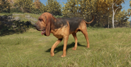 Bloodhound male black and tan saddle