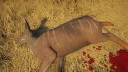 Lesser kudu grey.jpg