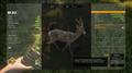 Diamond Common Roe Deer