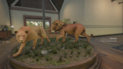 Common Lion & Lioness in Royalty Multi-Mount