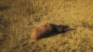 Lesser kudu dusky