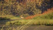 Grazing fallow deer buck