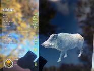 Diamond Common Wild Boar