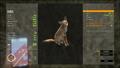 Common Coyote
