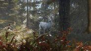 Albino Blacktail Deer