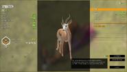 Springbok (Gold)