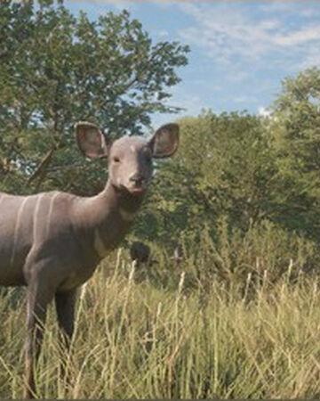 Lesser kudu.jpg
