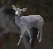 Mule Deer Dilute