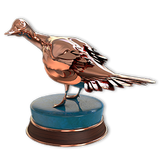 Northern pintail bronze