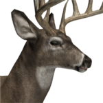 Whitetail deer male common.png