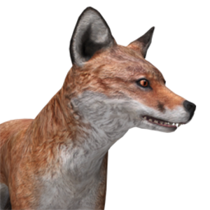 Red Fox The Hunter Wikia Fandom