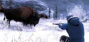 2015 10 hunting bison