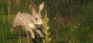 2014 05 rabbit 1