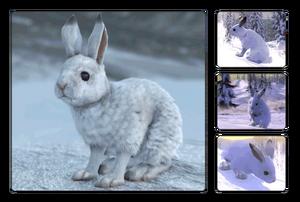 Species snowshoe.png