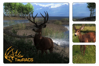 Blacktail Deer The Hunter Wikia Fandom