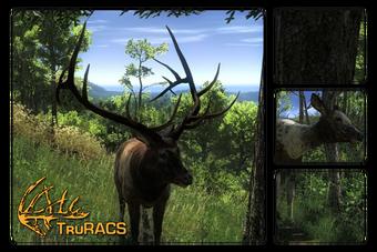 Roosevelt Elk The Hunter Wikia Fandom
