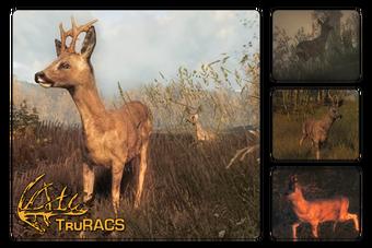 Roe Deer The Hunter Wikia Fandom