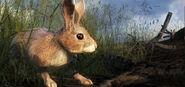 2014 05 rabbit 4