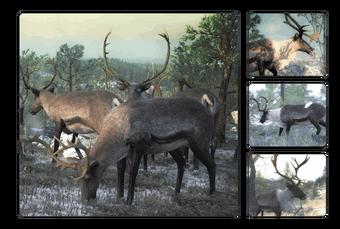 Reindeer The Hunter Wikia Fandom