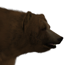 Brown bear male common.png
